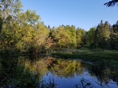Pond in Finger Lakes National Forest.jpg